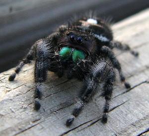 Super Cute Spider くもはかわいい